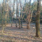 film bosco affitto